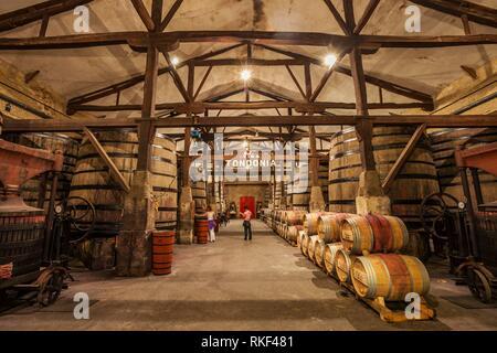 Lopez de Heredia Wine Cellar. Viña Tondonia. Haro. La Rioja. Spain. - Stock Photo