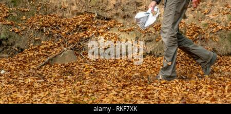 A woman walks on a forest path through autumnal beech leaves with copy space - Stock Photo
