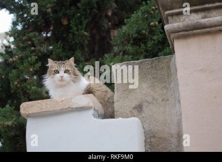 Fluffy cat perching on a stone pillar in Palma, Mallorca, Spain. - Stock Photo