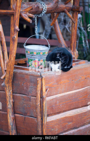 Black and white cat sitting on wooden well outdoors in the back yard - Stock Photo