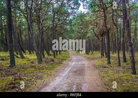 Forest road in strict protection area of Slowinski National Park, located on the Baltic coast in Pomeranian Voivodeship of Poland. - Stock Photo