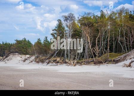 Shoreline erosion in strict protection area of Slowinski National Park on the Baltic coast in Pomeranian Voivodeship, Poland. - Stock Photo
