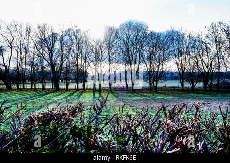 A line of  twenty trees in a field in the winter, silhouetted by the early morning sun rising over the South Downs National Park, casting long shadows - Stock Photo