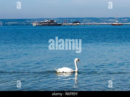 A swan and passenger ship on Lake Constance near Immenstaad - Immenstaad, Lake Constance, Baden-Wuerttemberg, Germany, Europe. - Stock Photo