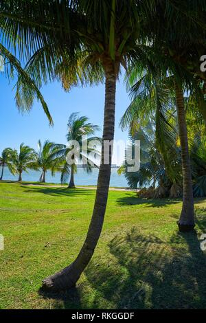 Cancun Pok-Ta-Pok palm trees in Hotel Zone at Nichupte Lagoon of Mexico. - Stock Photo