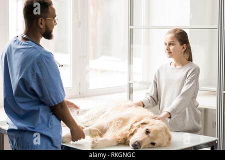 Working in veterinary clinics - Stock Photo