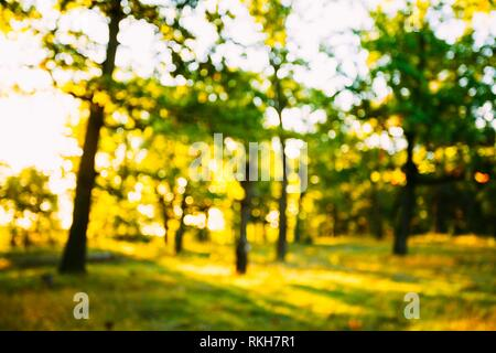 Abstract Summer Spring Natural Blurred Forest Background. Bokeh, Boke Woods With Sunlight. - Stock Photo