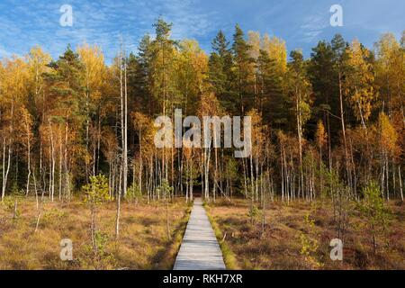 Wooden Path Way Pathway From Marsh Swamp To Forest. Autumn Season. - Stock Photo