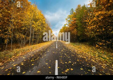 Open Asphalt Road Path Walkway Through Autumn Forest In Sunny Day. Nobody. - Stock Photo