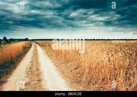Country Road Near Yellow Golden Ripe Barley Ears Summer Wheat Field. Moody Dark Sky Before Storm Under Rural Field Landscape. - Stock Photo