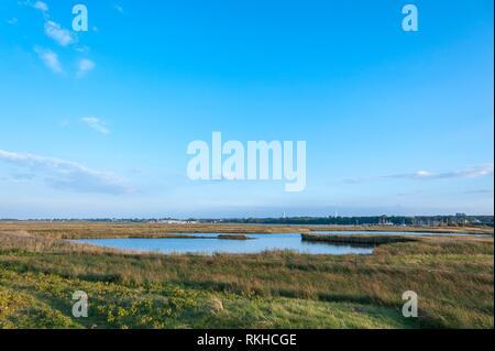 Nature reserve Graswarder, Heiligenhafen, Baltic Sea, Schleswig-Holstein, Germany, Europe. - Stock Photo