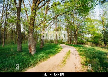 Beautiful Green Forest In Spring Season. Countryside Road, Path, Way, Lane, Pathway On Sunny Day. - Stock Photo