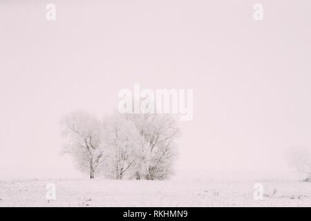 Snow-covered Field In Winter Frosty Day. Fluffy Trees In Snow. Minimalism In Winter Landscape. - Stock Photo