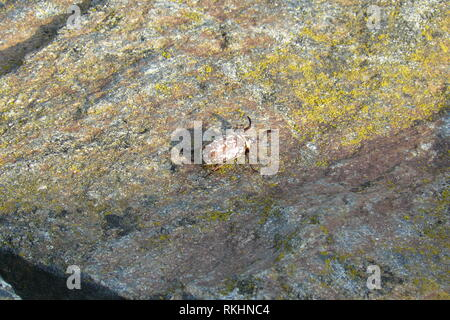 Beetle crawling on a rock - Stock Photo