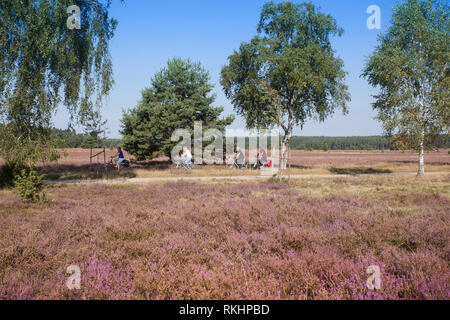 ourists in a horse-drawn carriage in the landscape with flowering heather (Calluna vulgaris) nature reserve Lueneburg Heath, Lower Saxony, Germany, Eu - Stock Photo