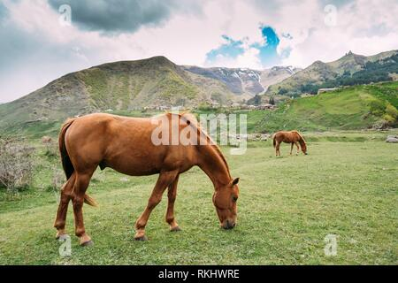 Two Red Brown Horses Eating Grass In Spring Pasture. Horse Grazing On A Green Mountain Slope In Spring In Mountains Of Georgia. - Stock Photo