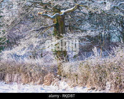 A tree covered in hoar frost on a snowy winter's day. - Stock Photo