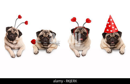 four cute Valentine love pug puppy dogs, with hearts, hanging on white banner, isolated - Stock Photo