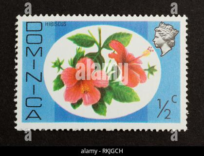 DOMINICA - CIRCA 1980: Stamp printed in Dominica shows a hibiscus, circa 1980. - Stock Photo