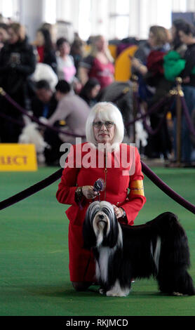 New York, United States. 11th Feb, 2019. Westminster Dog Show - New York City, 11 February, 2019: Handlers with Tibetan Terriers as they await judging during the Best of Breed Competition at the 143rd Annual Westminster Dog Show in New York City/ Credit: Adam Stoltman/Alamy Live News - Stock Photo