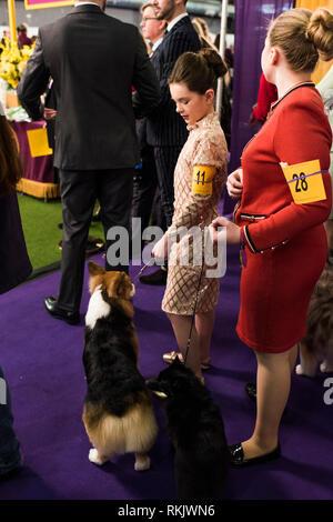 New York City, USA -February 11, 2019: Westminster Dog Show, New York City. Credit: Valery Rizzo/Alamy Live News - Stock Photo