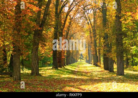 Autumn park with beautiful trees covered yellow and red foliage. Seasonal specific. Multicolored trees with path in autumn park. - Stock Photo