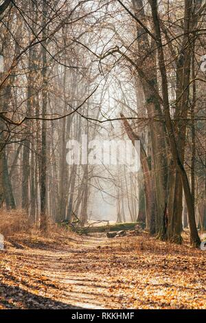 Gomel, Belarus. Countryside Road Lane Path Walkway Through Oak Autumn Forest With Trees. Sunset Sunrise. Nobody. Beautiful Alley In Park. - Stock Photo