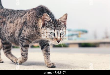 A beautiful cat on the street. - Stock Photo