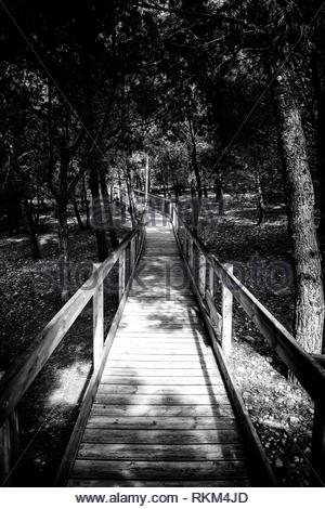 Wooden walkway in the forest, pass through nature for people. - Stock Photo