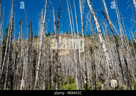 Trees, dead from an old forest fire in the North Cascade mountains, Washington, USA. - Stock Photo