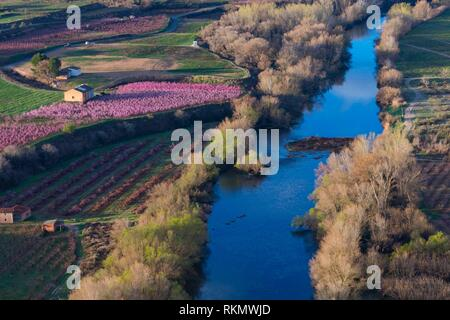 Flowering, Peach tree (Prunus persica), Willow tree (Salix sp. ), Fruiturisme, Tourism Experience, Aitona village, Segre river, Baix Segre, Lleida, - Stock Photo