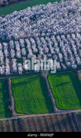 Flowering, fruit tree, Fruiturisme, Tourism Experience, Aitona village, Baix Segre, Lleida, Catalonia, Spain, Europe. - Stock Photo