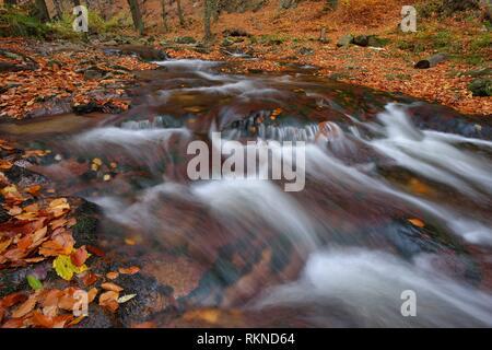 The river Ilse in the Ilse Valley with autumn leaves, autumn. Heinrich Heine Trail. Ilse River, Ilse Valley, Ilsenburg, Harz National Park, Harz, - Stock Photo