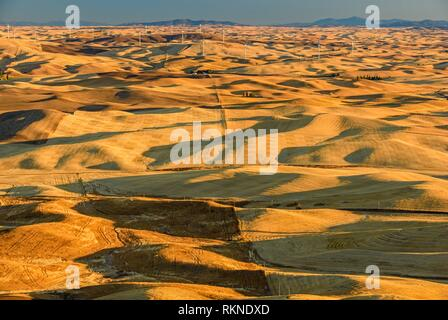 Mowing and harvest patterns in the Palouse landscape at dawn in late summer, Steptoe Butte State Park, Washington, USA. - Stock Photo