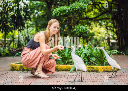Young woman feeding ibes in the park. Little Egret Cattle egret Bubulcus ibis Waters Edge - Stock Photo