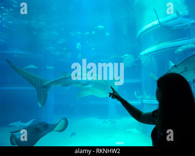 A woman points at a whale shark (Rhincodon typus) and other sea creatures at the Pacific Ocean exhibit at Osaka Aquarium Kaiyukan in Osaka, Japan. - Stock Photo