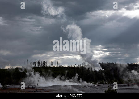 WY03435-00...WYOMING - Steam rising from Steamboat Geyser and surrounding hot springs in Norris Geyser Basin at Yellowstone National Park. - Stock Photo