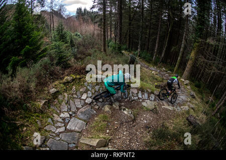 Two men on mountain bikes ride a rocky trail at Coed-y-Brenin trail centre in North Wales - Stock Photo