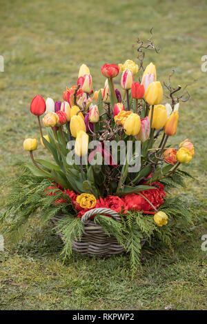 colorful bouquet of fresh tulip flowers in garden - Stock Photo