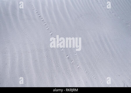 Animal tracks, marks and trails on white sand dune at White Sands National Monument in New Mexico, United States of America. Southwest American park n - Stock Photo