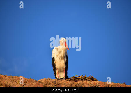 Stork & Nest on walls of El Badii Palace, Marrakech, North Africa - Stock Photo