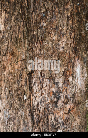 full frame image of a old and aged tree bark for background. vertical orientation - Stock Photo