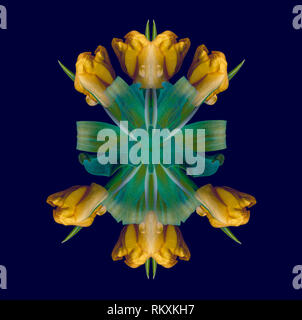 Fine art floral decorative geometrical symmetrical color pattern/ornament/mandala/decor made of macros of golden yellow green tulips,blue background - Stock Photo