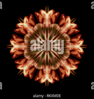 Fine art floral decorative geometrical symmetrical color pattern/ornament/mandala/decor made from macros of yellow brown tulips on black background - Stock Photo