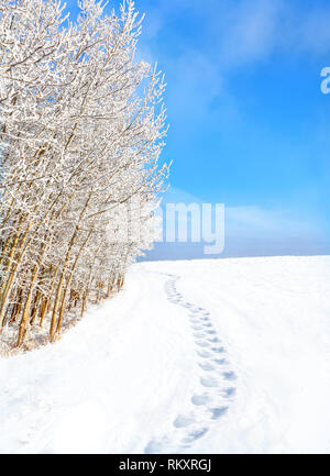 Footprints on snow path along trees covered with snow after fresh, heavy snowfall. Blue sky and copy space. - Stock Photo