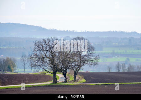 Big leafless trees at a crossroads in the country - Stock Photo