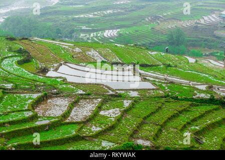 Terraced rice fields, Muong Hoa Valley, near Sapa, northern Vietnam. - Stock Photo