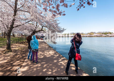 Washington DC, USA - April 5, 2018: Tourists people taking pictures by Tidal Basin lake pond cherry blossom sakura trees in spring during festival at  - Stock Photo