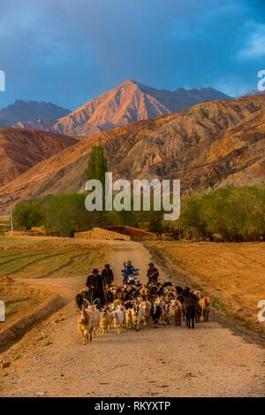 Men herding goats, Tashkurgan (means Stone Fortress in Uyghur), at 10,100 feet, along the Karakoram Highway. It was a caravan stop on the Silk Road - Stock Photo