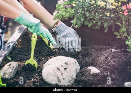 Spring gardening, planting flower seedlings, gardeners hands in protective gloves in the ground - Stock Photo